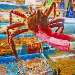 Noryangjin Fish Market blog — Explore Noryangjin market & tasting King Crab at the largest fish market in Seoul