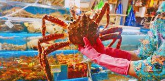 king crab noryangjin-fish-market-guided-tour_01
