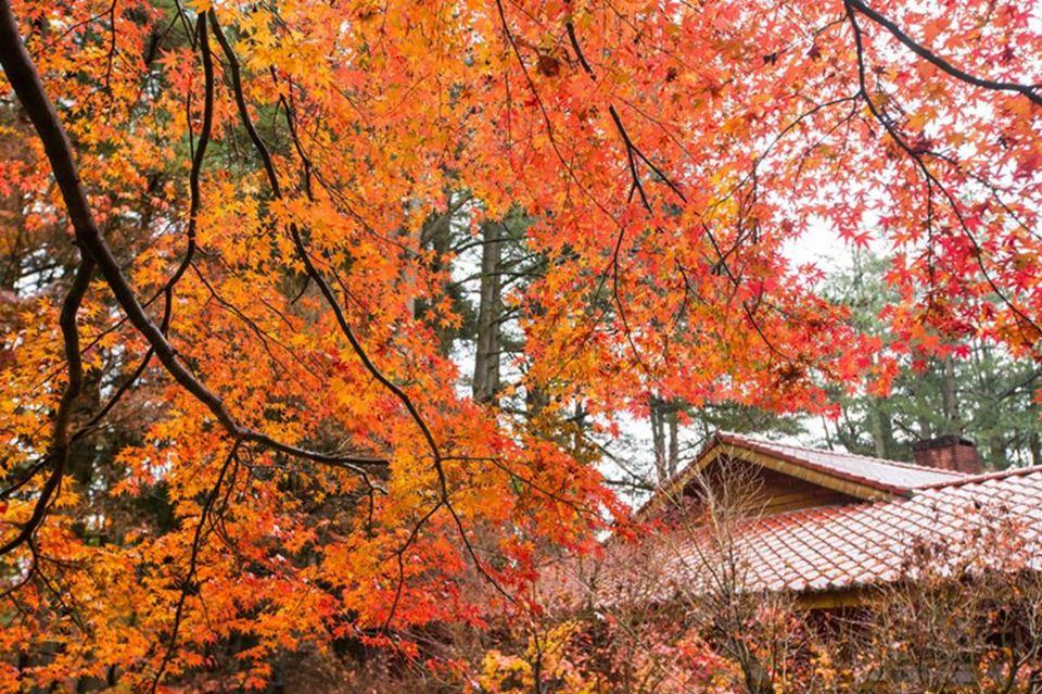 taichung fall
