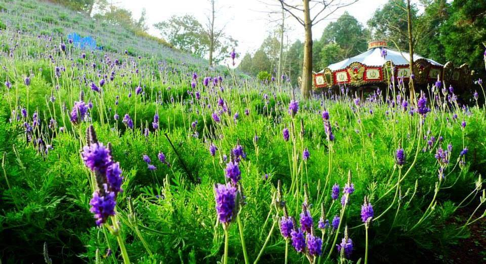 Lavender Cottage taichung