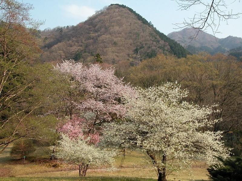 Nikko Botanical Garden2