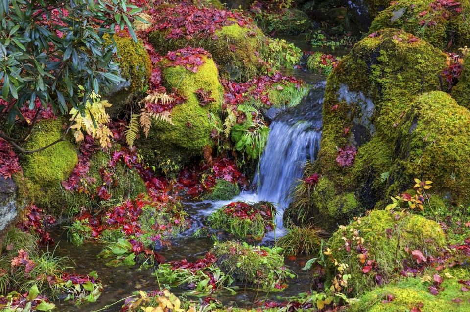 botanical garden nikko-autumn-foliage-1024x682