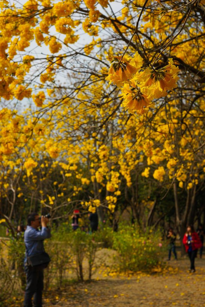 tainan autumn