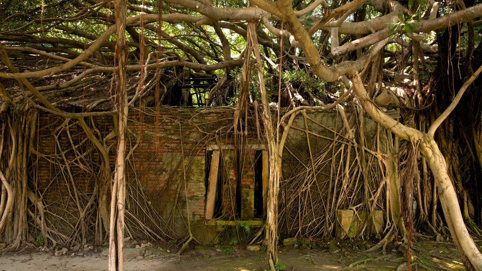 114301-Anping-Tree-House