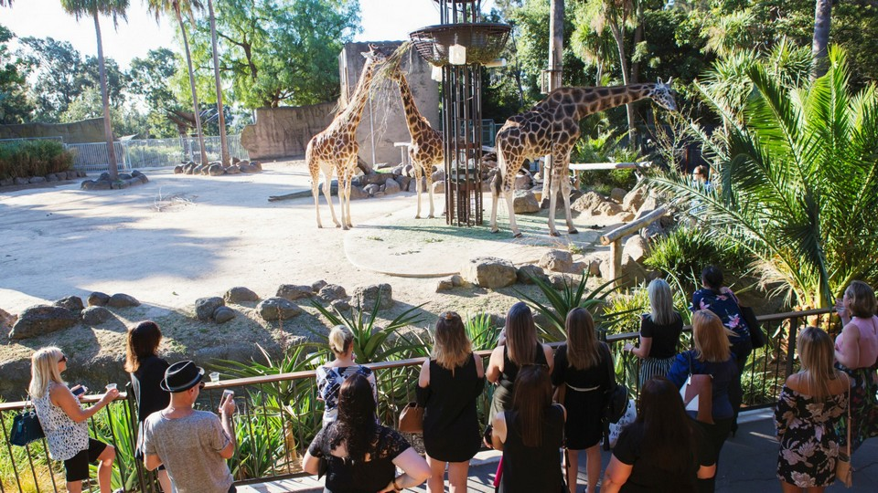 Melbourne Zoo24 one day in melbourne,one day in melbourne itinerary,one day trip in melbourne,