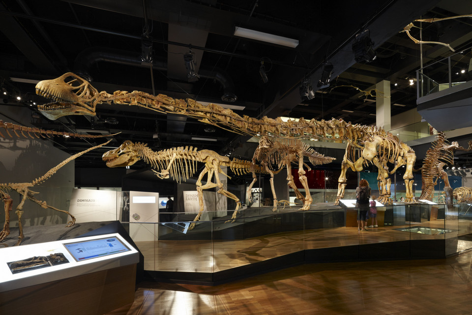 Tarbosaurus and Mamenchisaurus on display in the Dinosaur Walk exhibition.