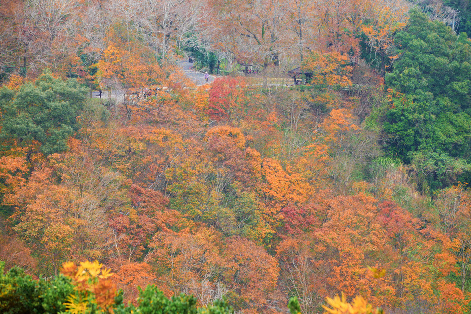 N017_Red-Maples-Shihmen-Dam-Taoyuan_S