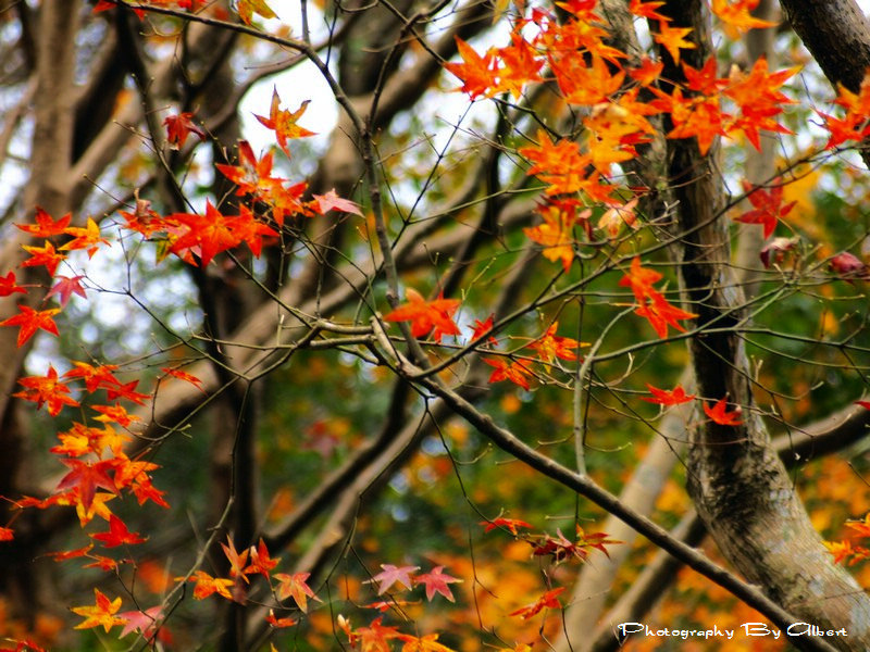 N017_Red-Maples-Shihmen-Dam-Taoyuan_S3