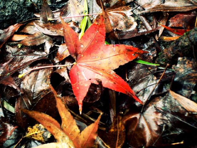 Xiao Wulai autumn