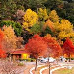 Maple leaves season in Taiwan — Top 9 best place to see autumn leaves in Taiwan