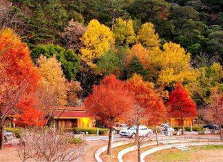 Taiwan in Autumn
