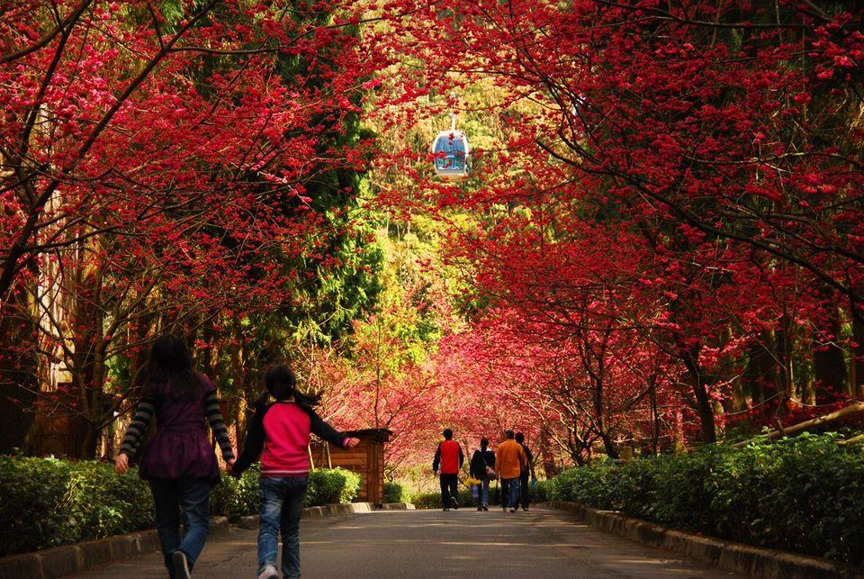 Taipingshan autumn3