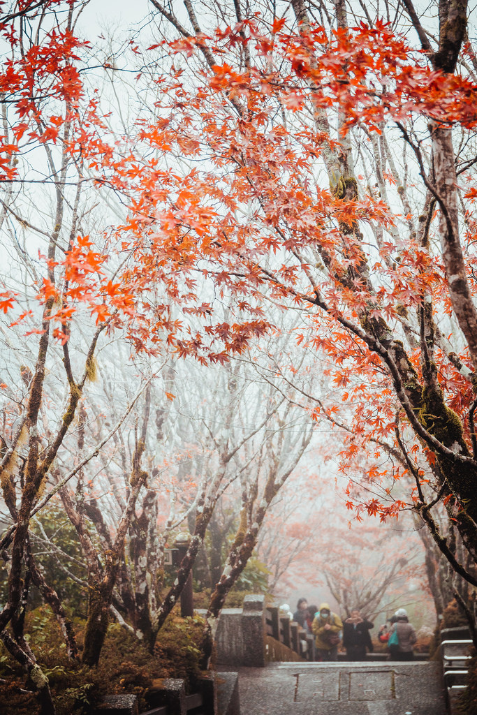Taipingshan autumn3 Picture: maple leaves season in taiwan blog.