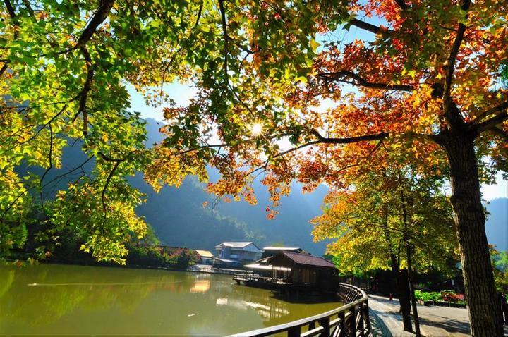 Che Cheng autumn 3