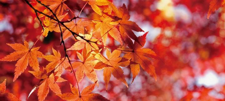 Wulai autumn