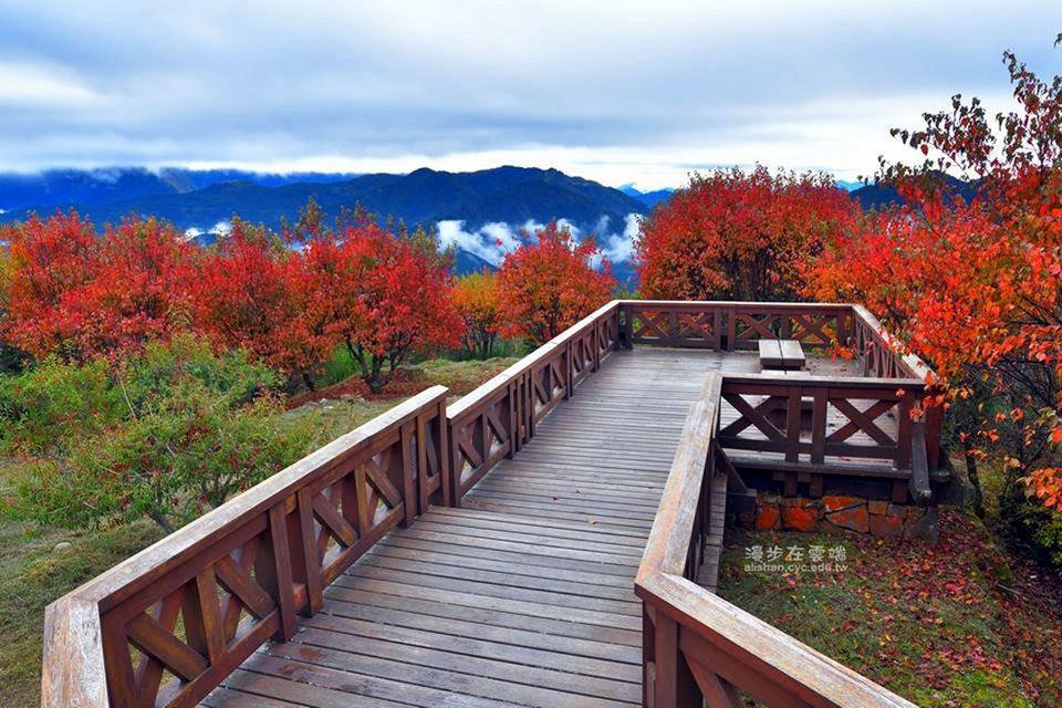 alishan autumn