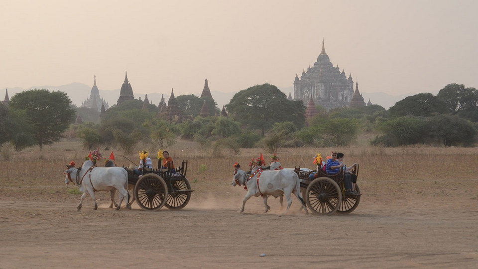 Tourists take bullock carts visiting around Bagan.