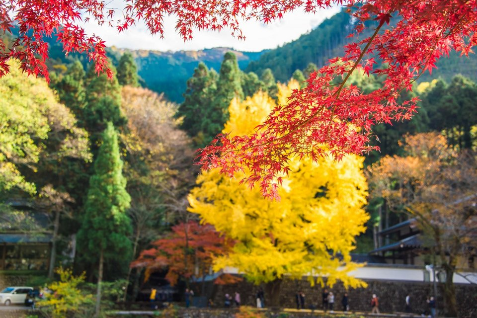Autumn-in-Tokyo-Fall-Leaves