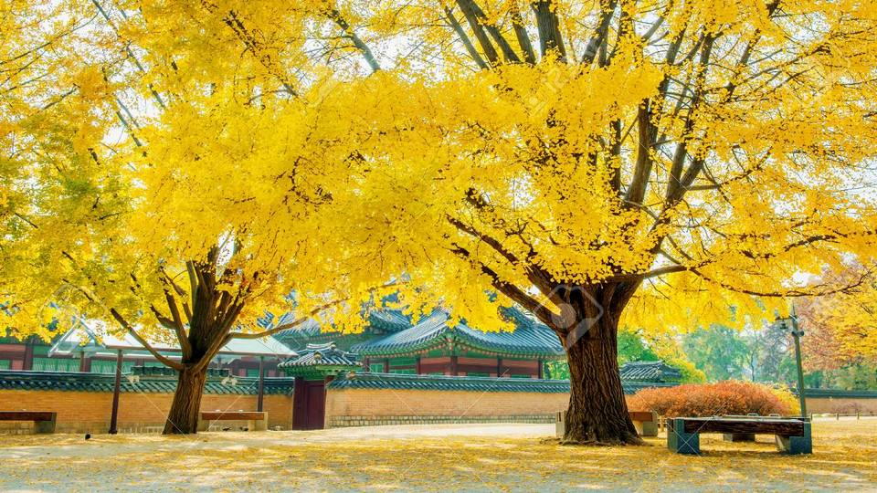 Autumn in Gyeongbokgung Palace,South Korea. Stock Photo - 85855713