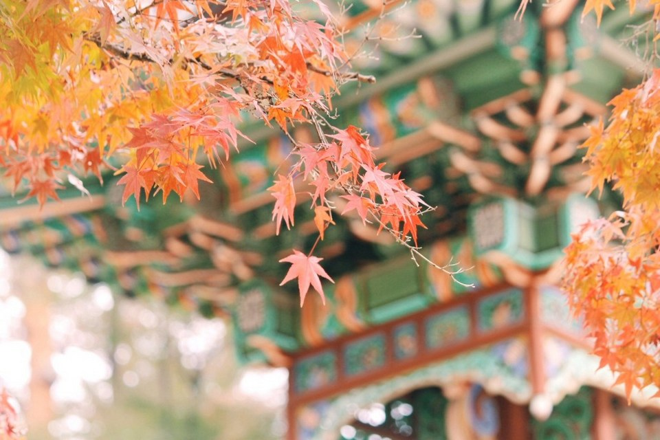 Changdeokgung Palace Autum Leaves in South Korea