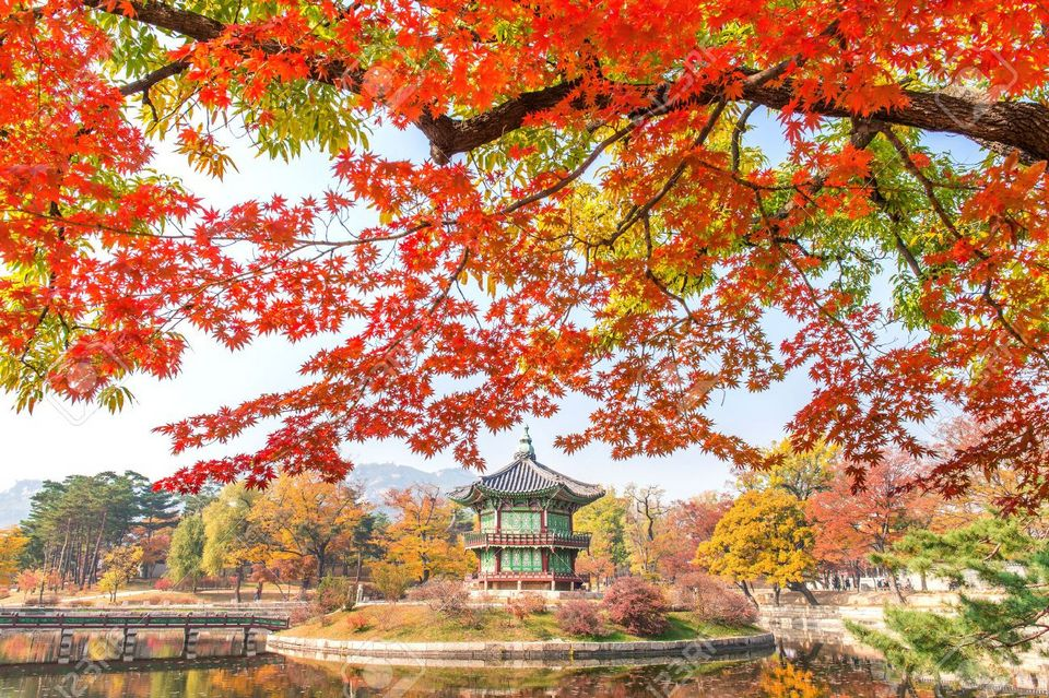 Gyeongbukgung and Maple tree in autumn in korea