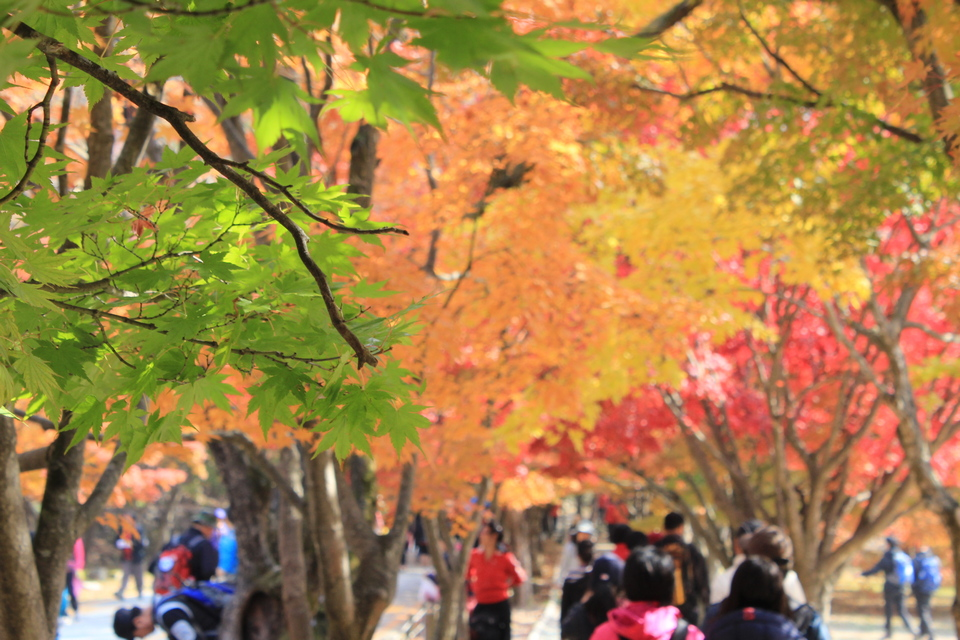 fall foliage forecast korea 2018 fall foliage korea 2018 when is autumn in korea (1)