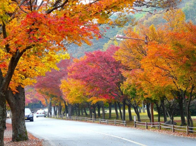 fall foliage forecast korea 2018 fall foliage korea 2018 when is autumn in korea (2)