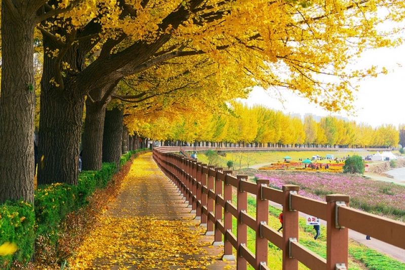fall foliage forecast korea 2018 fall foliage korea 2018 when is autumn in korea (3)
