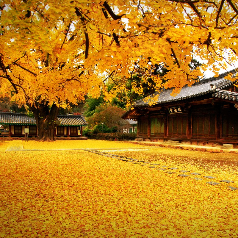fall foliage forecast korea 2018 fall foliage korea 2018 when is autumn in korea (4)