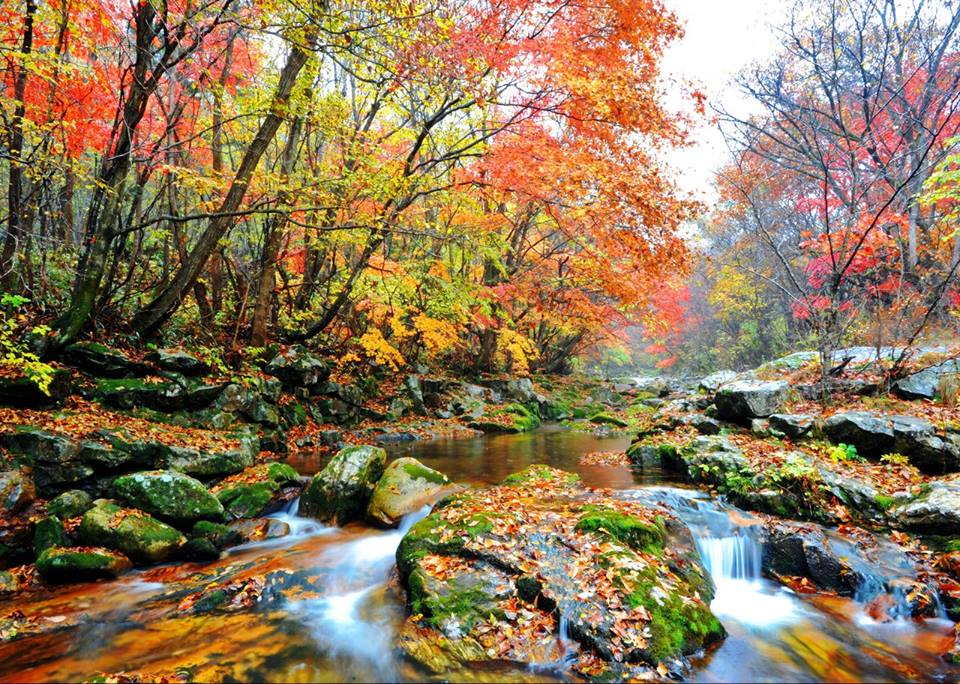 fall foliage forecast korea 2018 fall foliage korea 2018 when is autumn in korea (6)