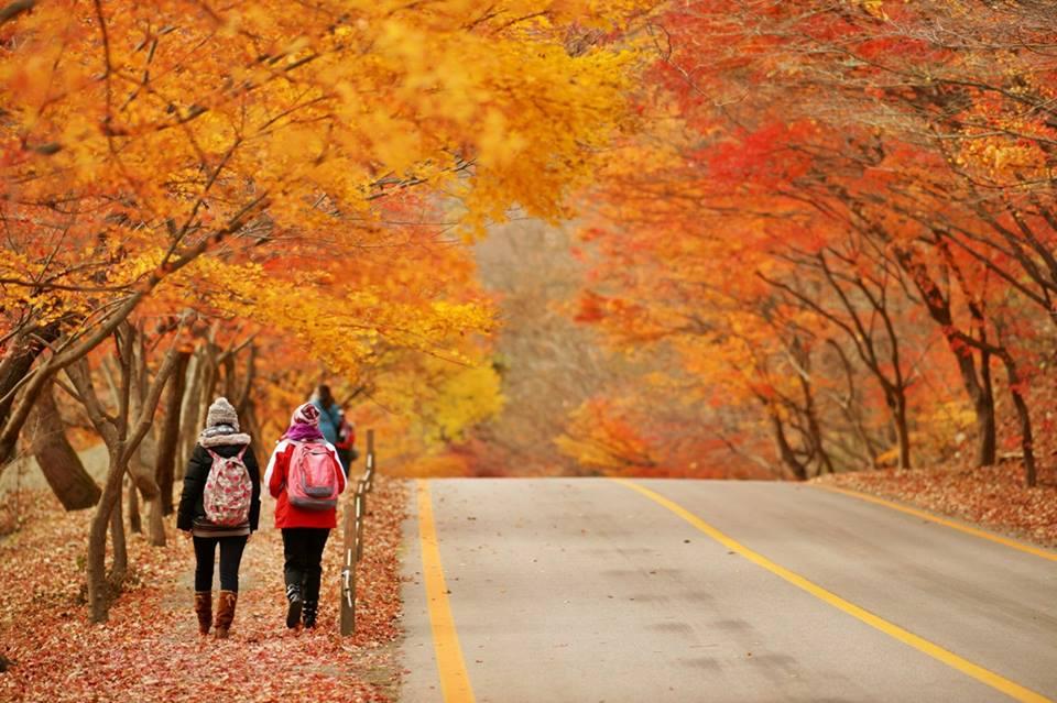 fall foliage forecast korea 2018 fall foliage korea 2018 when is autumn in korea (6)