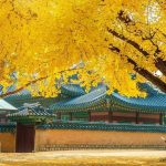 Fall foliage forecast Korea 2018 — Top 16 best places to see autumn fall foliage Korea 2018