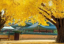 korea in autumn