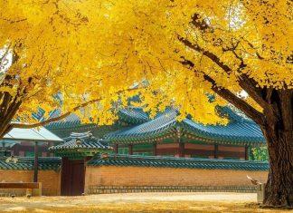 korea in autumn