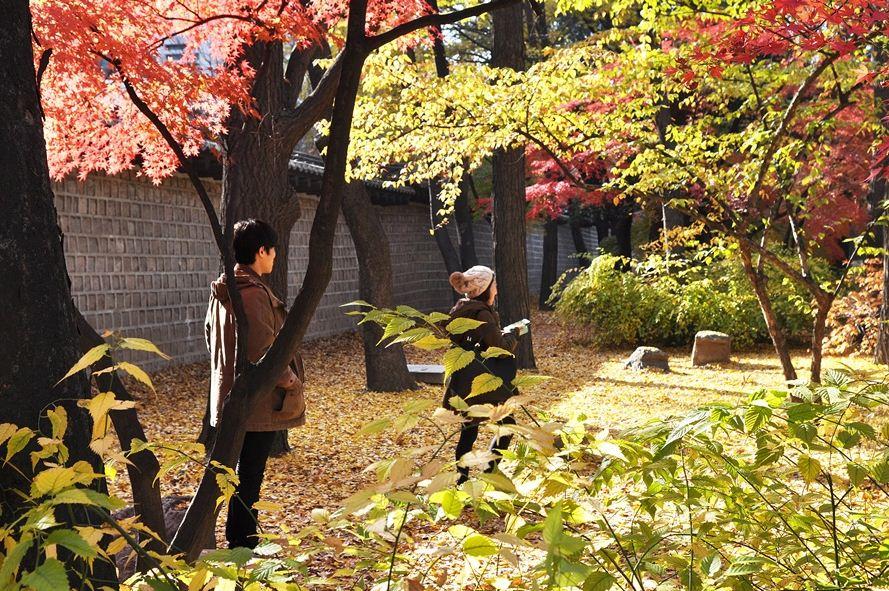 Deoksugung Doldam-gil road autumn seoul