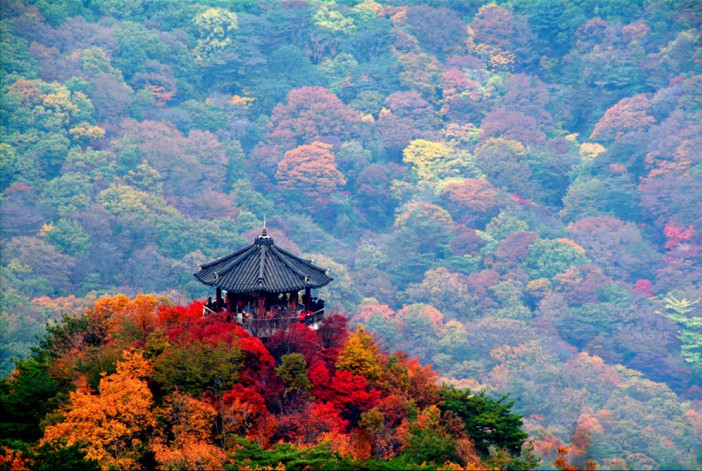 Naejangsan national park observation desk autumn
