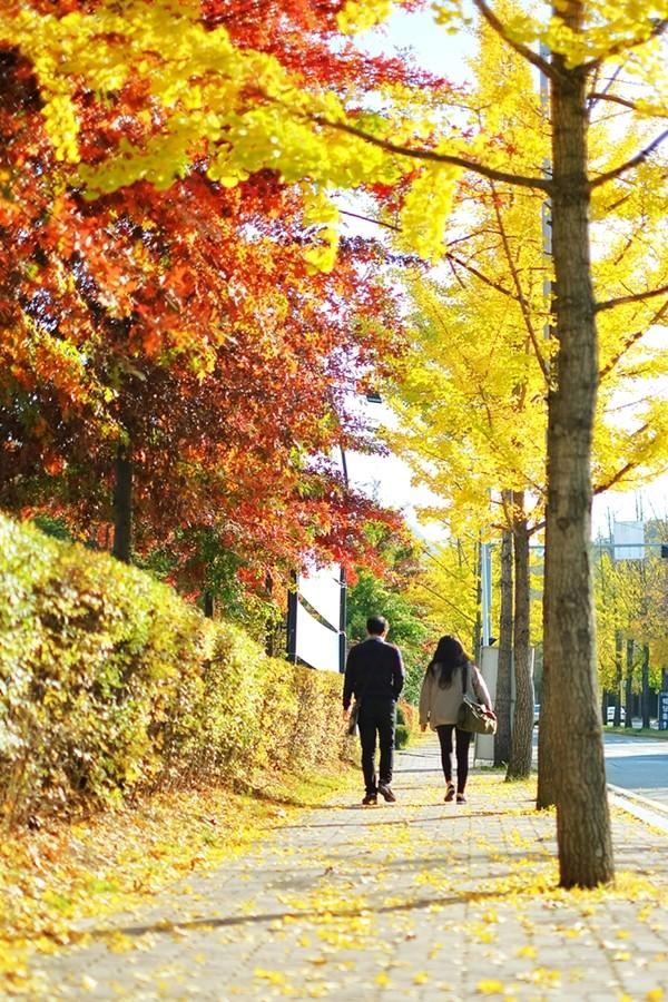 Nakseongdae's Garosu-gil Road autumn