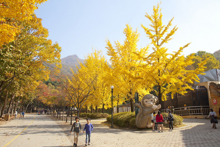 Seoul Grand Park autumn Foto by: korea fall foliage forecast 2018 blog.