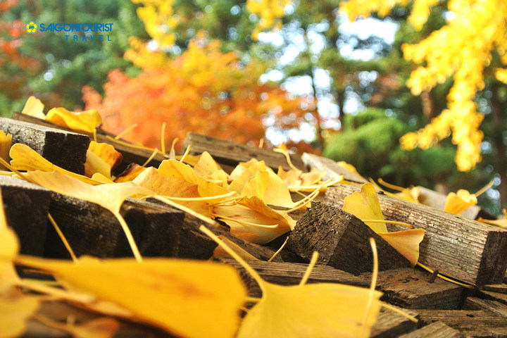 nami island autumn foliage 2018 forecast 1