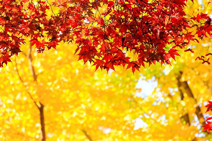nami island autumn foliage 2018 forecast 1