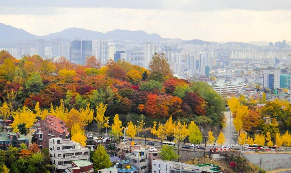 namsan-autumn