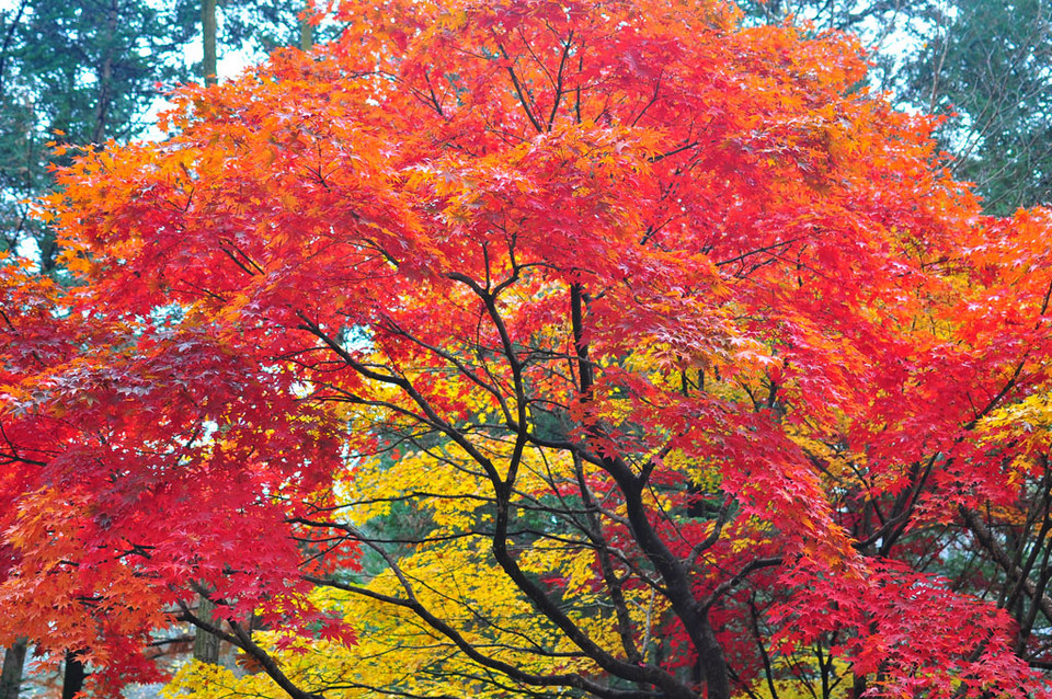 namsan autumn 2