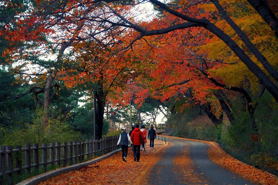 namsan autumn 2