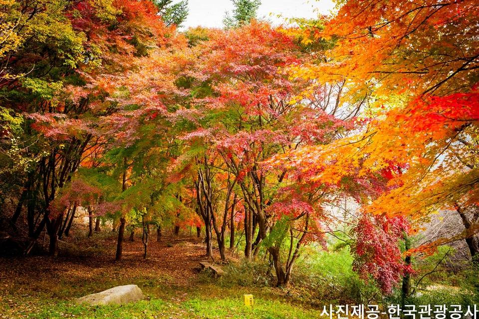 Gayasan National Park and Cheongdo Rail Bike Autumn Tour from Busan - KKday