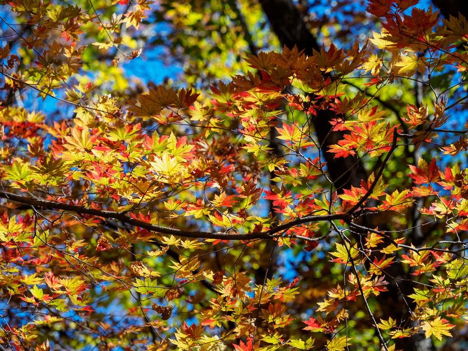 Gayasan National Park and Cheongdo Rail Bike Autumn Tour from Busan - KKday
