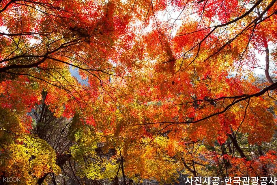 Haeinsa Temple busan| busan fall foliage