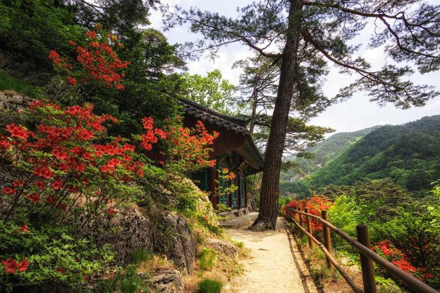 Odaesan National Park Autumn foliage korea