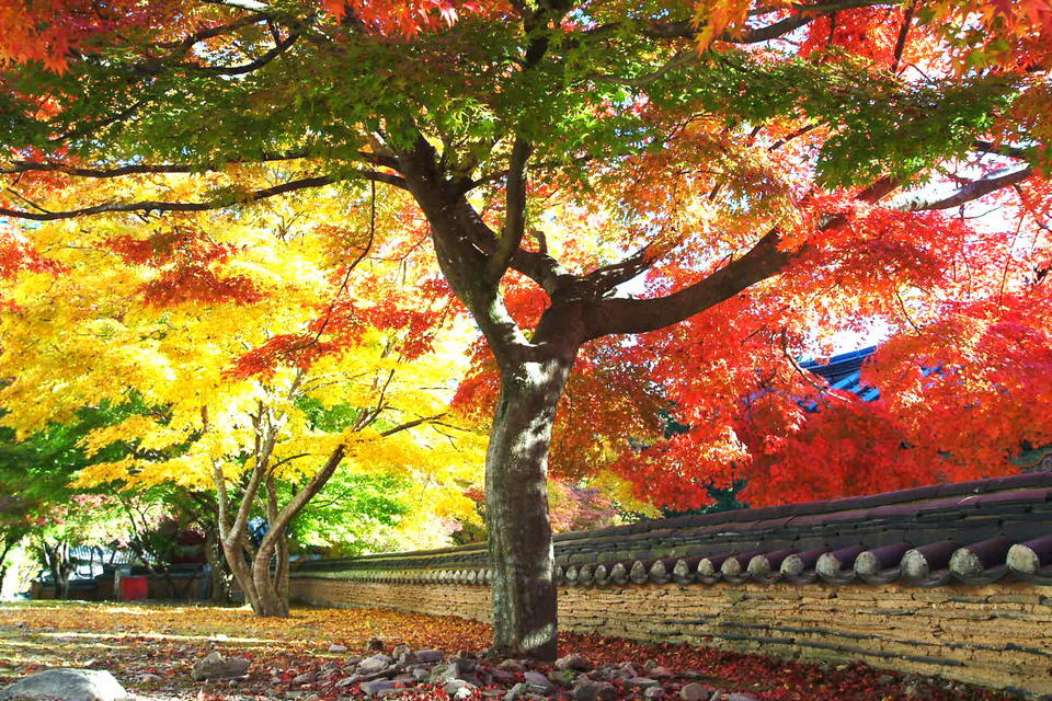 autumn foliage in busan busan attractions in autumn busan autumn Romantic Autumn in Yongdusan Park