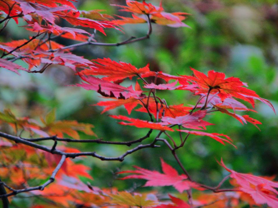 autumn-Jirisan National Park 2