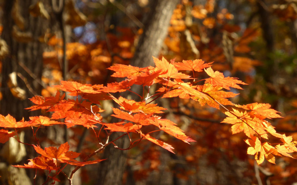 autumn-Jirisan National Park 2| places to visit in busan during autumn